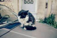 <h2>Wild cat</h2><p></p>
