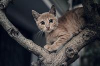 <h2>Kitty on  a tree